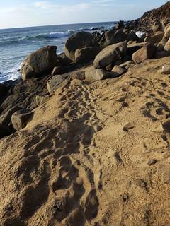 Beach scene, Sayulita