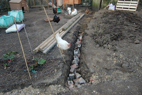 allotment drainage Apr 13 3