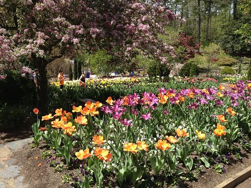 Apr.14.13 (4) @ Duke Gardens, Durham NC