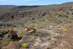 Ginkgo Petrified Forest State Park Backcountry