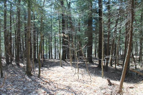 woodslake walkingawayfromthelake andyarthur