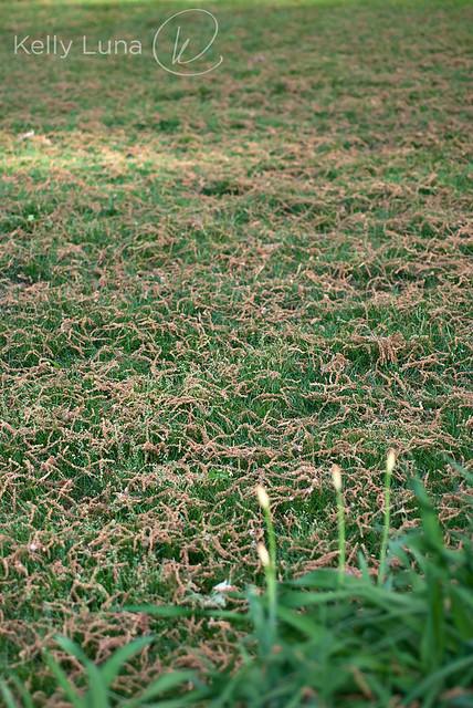 oak tassles-vert