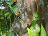 Jenn Sinasac posted a photo:	Spider at Sierra Llorona Lodge, Panama