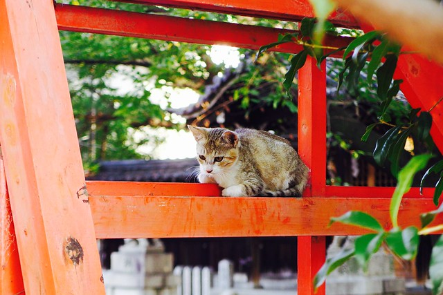 Today's Cat@2016-09-02