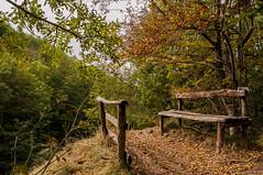 Panchina nel bosco