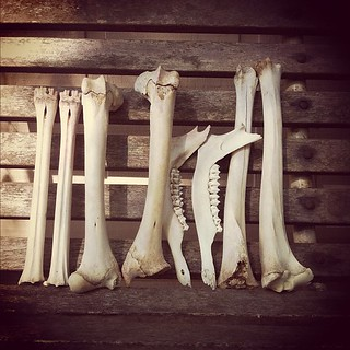 Just my usual day. Cleaning &  sorting bones for Bone Lust projects.