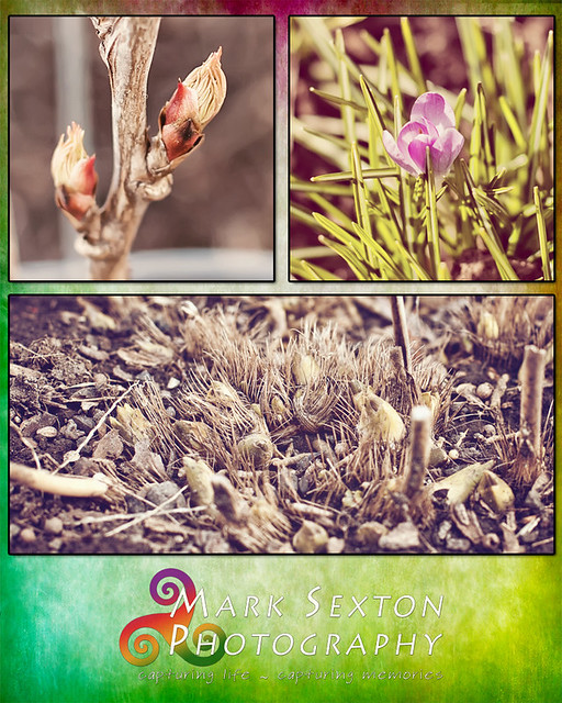 Signs of Spring 2013