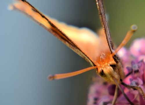 MothCUPsized