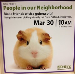 Guinea Pigs at the Library 2