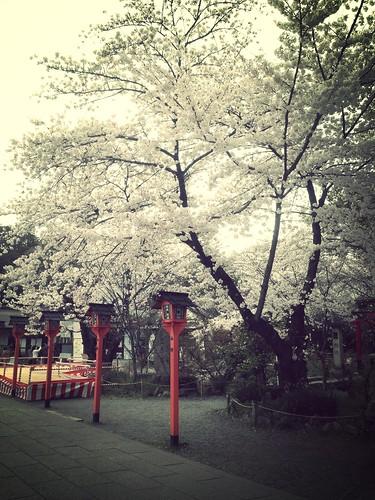 101 京大 哲學之道 平野神社