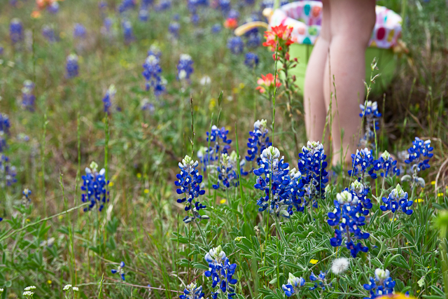 Easter Bluebonnets