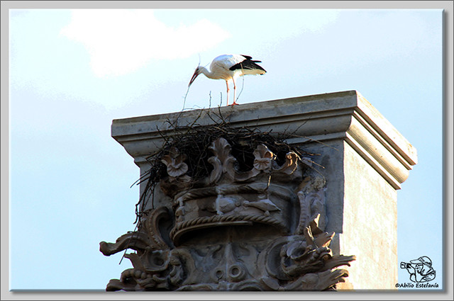 2 Cigüeña faenando con el nido