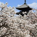 Spring in Kyoto by Teruhide Tomori