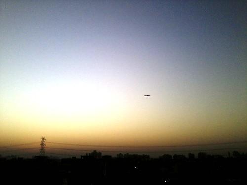 blue sky bird yellow sunrise dawn flying eagle eagleflying yellowbluesky