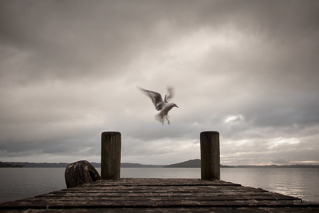 New Zealand - Seagull and pier
