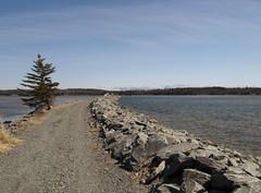Salt Marsh Trail