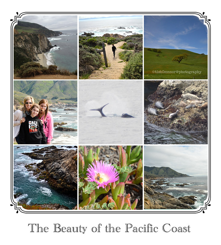PCH Collage -1