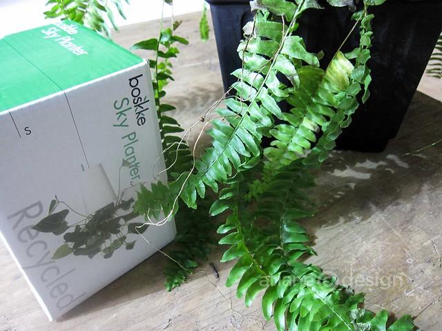 Boskke Sky Planter-15