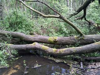 10-2012-0412 pieterpad-route-21-natuurpark schuitwater