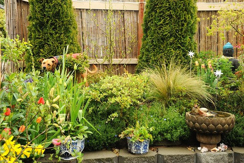 Rosie enjoying A Garden for the Buddha in her own way, munching spring grass, potted plants, lotus fountain, shells, Statue of Lord Buddha, bamboo fence, tulips, lights, Seattle, Washington, USA by Wonderlane