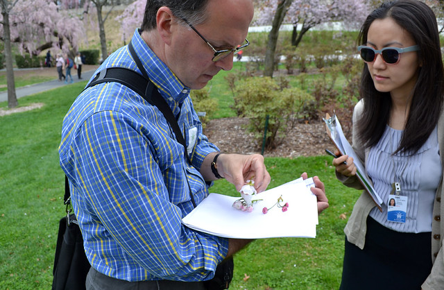 BBG staff accompanied cherry cultivar expert Tony Aiello of Morris Arboretum in Philadelphia as he examined the Garden's cherry collection. Photo by Elizabeth Peters.