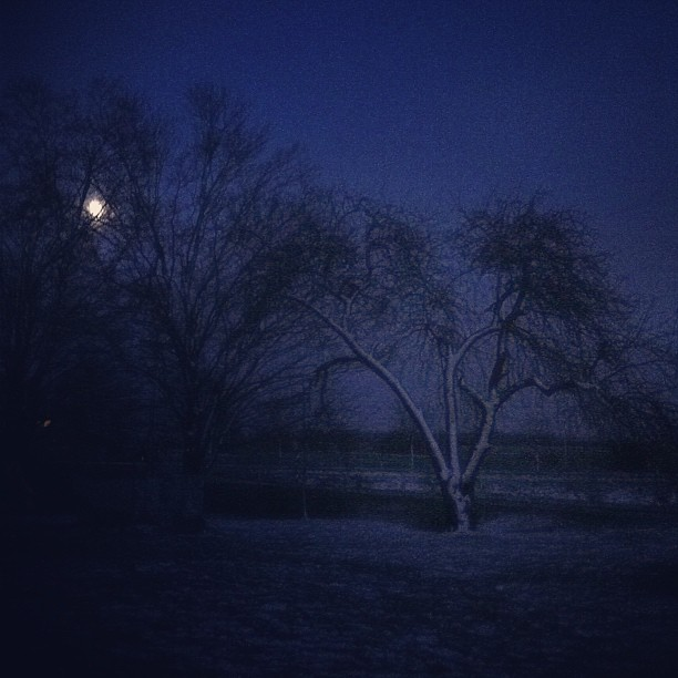 The #moon shines {soft}ly through the snow covered branches. #cmglimpse #cmig365apr #moonlight