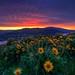 Rowena Sunrise by Fresnatic