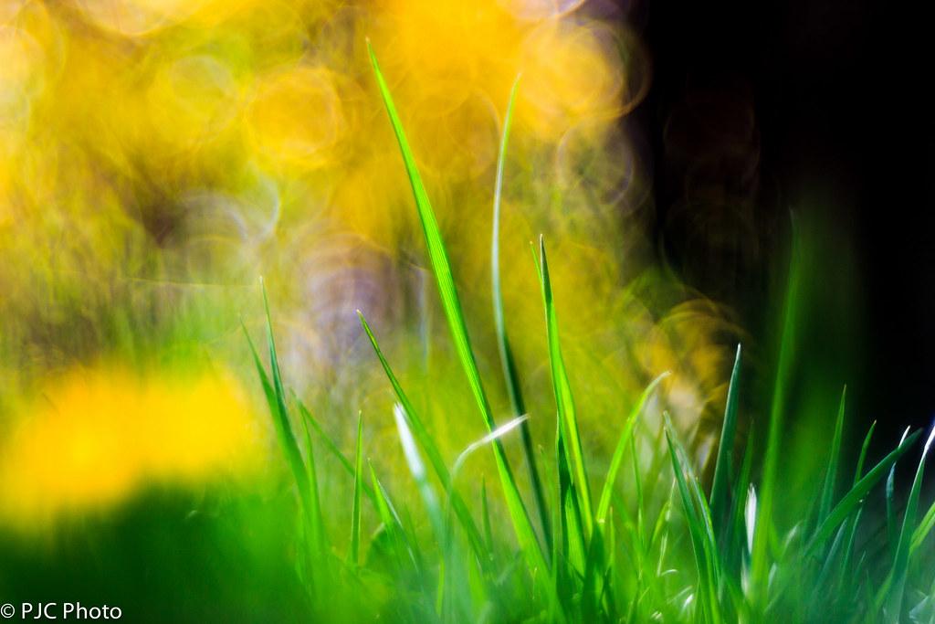 IMAGE: http://farm9.staticflickr.com/8118/8686525617_487dda6ed8_b.jpg