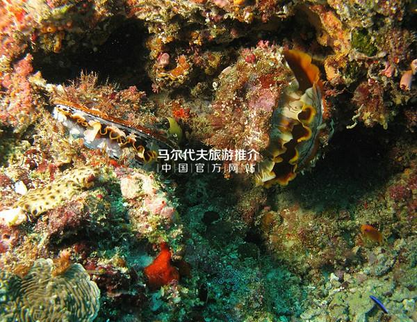 马尔代夫富饶的珊瑚礁