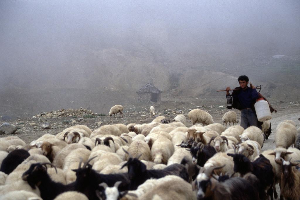 Iran - Monts Elbourz - Le berger