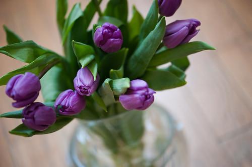 015 tulips