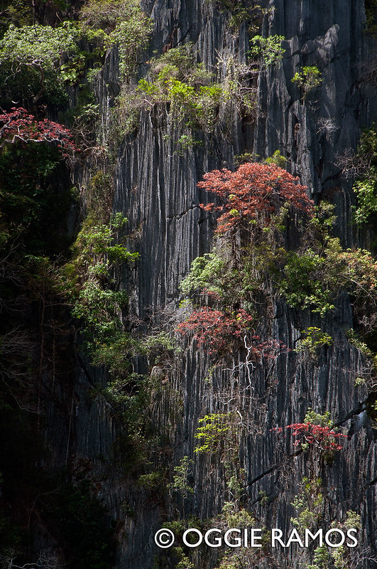 Coron - Kayangan Karsts and Vegetation