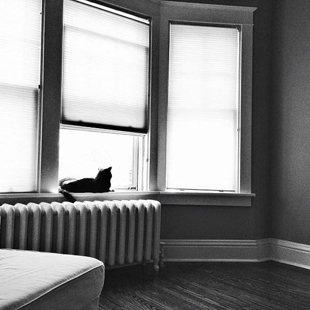 Stanley in the window. #pictapgo_app