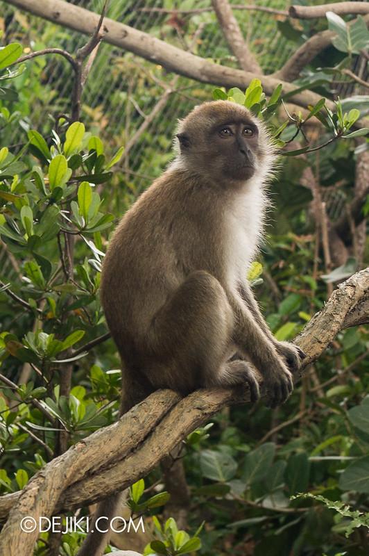 River Safari - Mekong River / Crab-eating Macaque 2