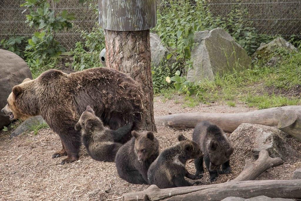 Stockholm Skansen Museum zoo bears