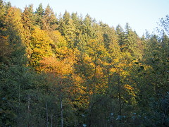 View from Issaquah–Preston Trail