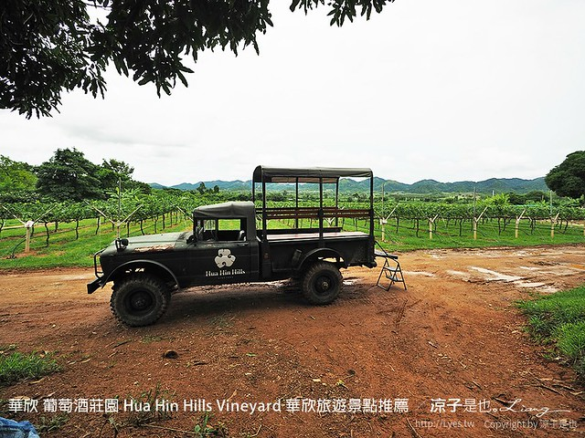 華欣 葡萄酒莊園 Hua Hin Hills Vineyard 華欣旅遊景點推薦 48