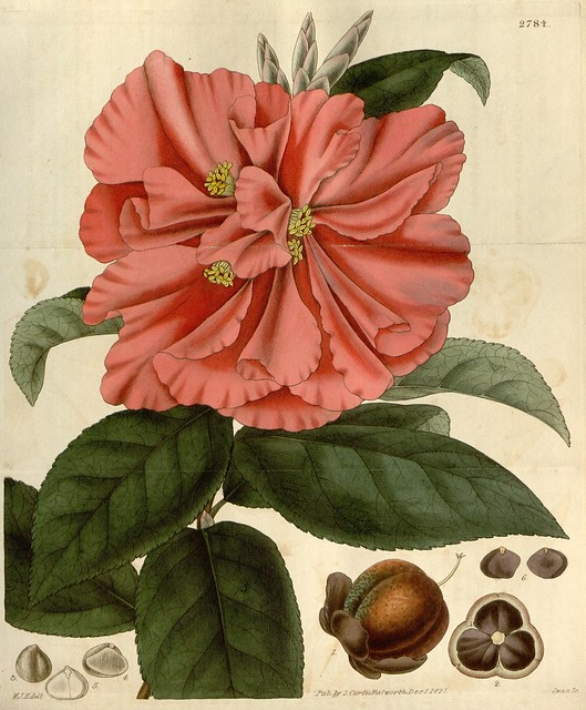 Curtis's botanical magazine v.54 [new ser.:v.1] (1827)