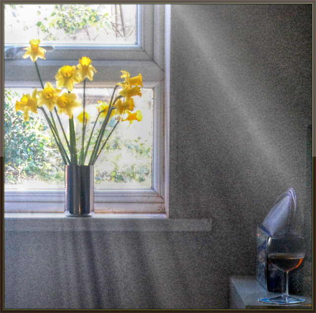 sunshine came softly through my window today flickr
