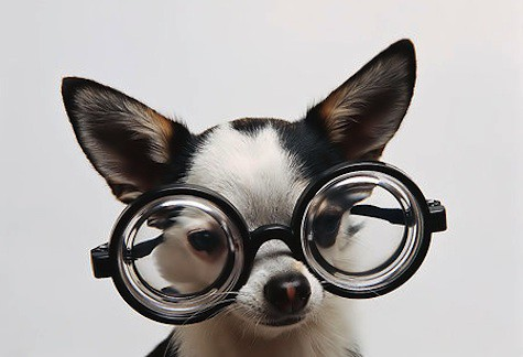 cute-dog-eyeglasses