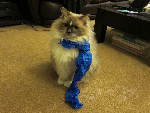 Tyco in Tissue Paper Scarf
