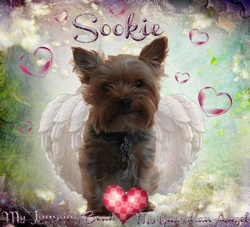 Sookie Angel