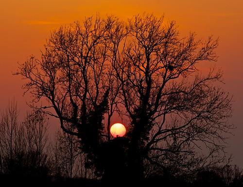 sunset sun tree night tramonto clear sole albero