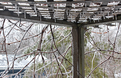 Ice Storm: Lattice Drips