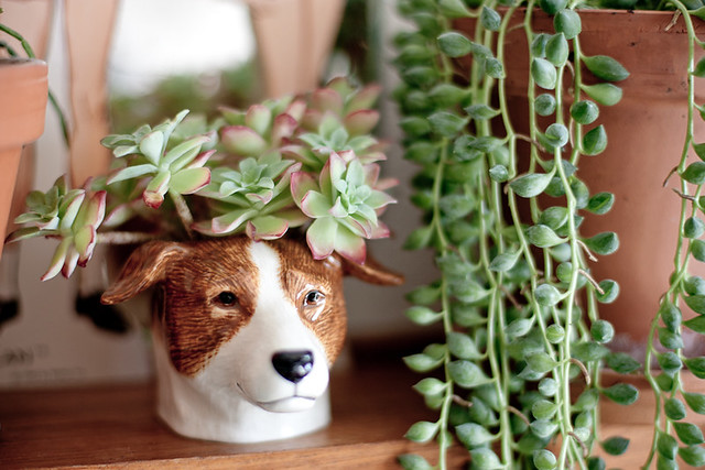 succulentes et vintage