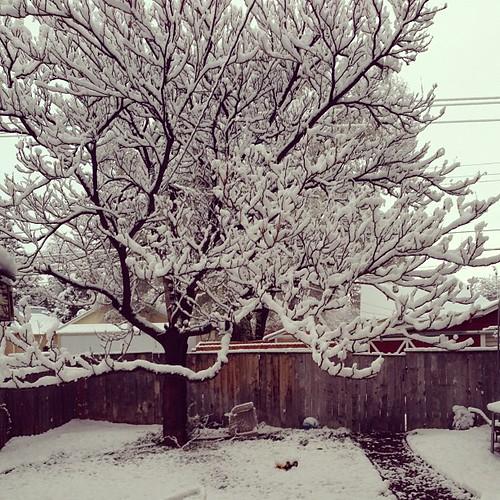 Backyard snow showers