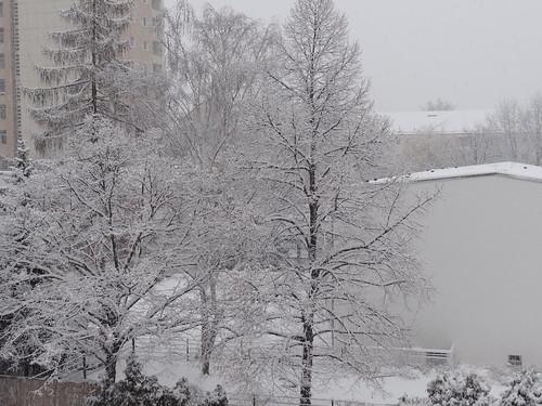 Winter im Wald des erstarrten Lebens grauer Eisnebel im frühen Dämmerschei 0520