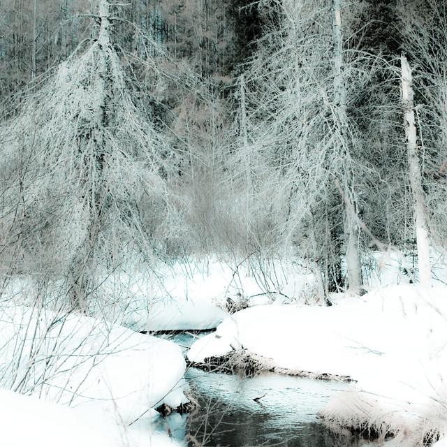 Joli ruisseau... sous ces branchages bleutés... je t'écoute...!!!