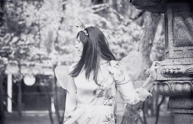 sakura fairy