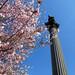 Green-Wood: Spring 2013
